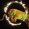 Цирки в Выгоничах