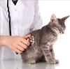 Ветеринарные клиники в Выгоничах
